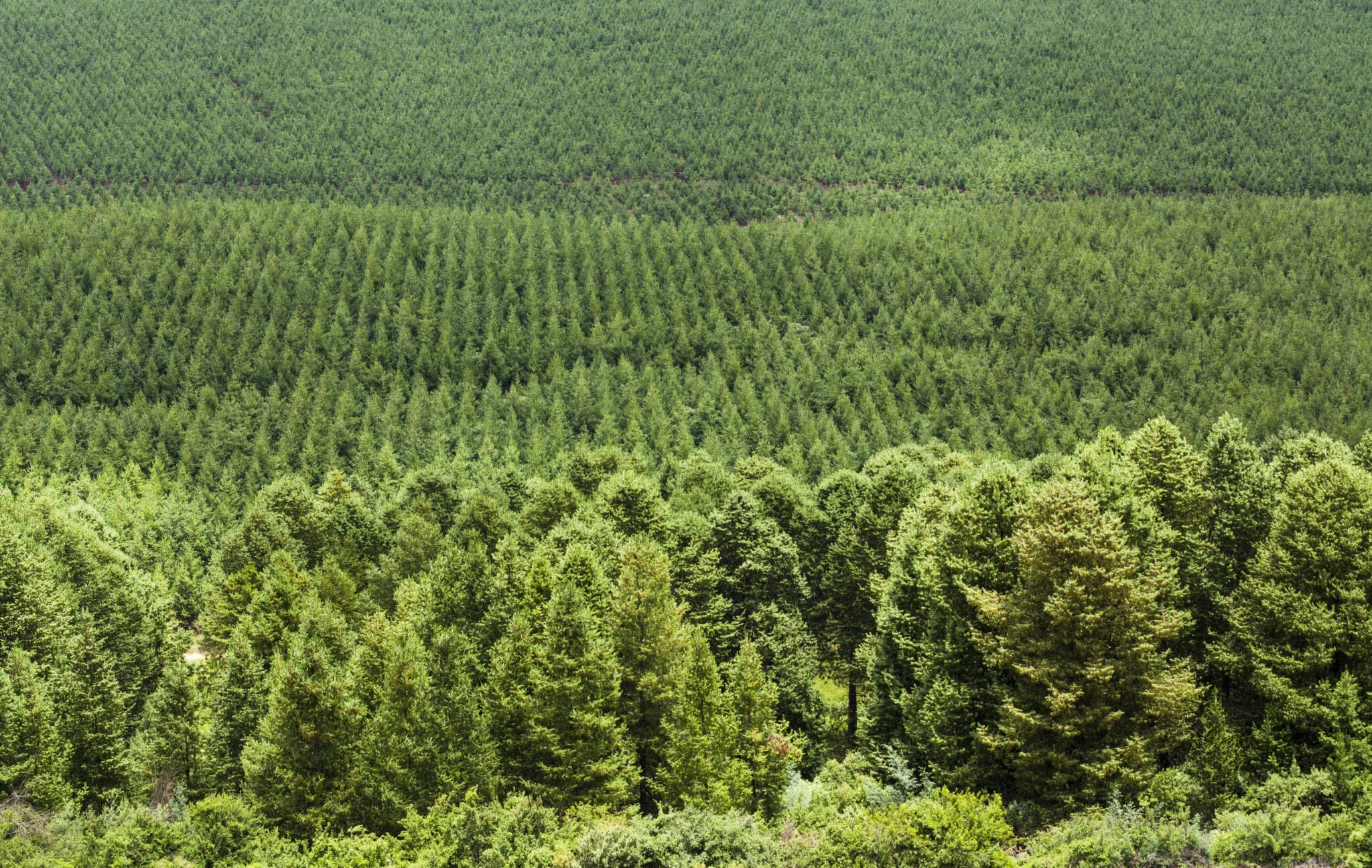 CHEP 100% zero-ontbossing bos