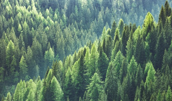 besparing_8miljoen_bomen